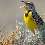 The number of birds in the US and Canada has dropped by an astounding 29% since 1970