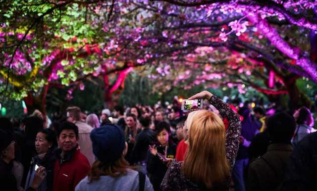 An exciting light show on Japan's River Park was held in which Cherry Flowers were decorated with over 400,000 electric lamps.
