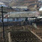 Crop production in North Korea is expected to fall to the lowest level in the last 5 years and it faces severe food shortages.