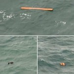 Team to find the missing plane planes bhyr near the Indonesian island of Borneo are seen floating objects in Java
